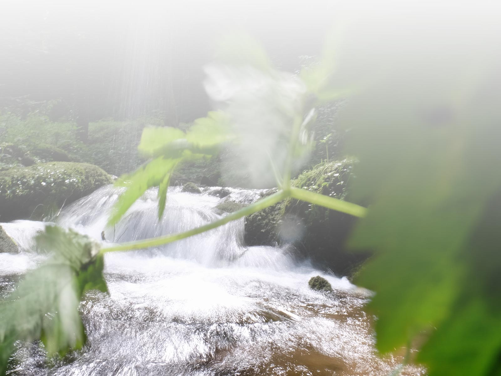 Carsharing Zukunft Teilen Natur Wasserfall 1
